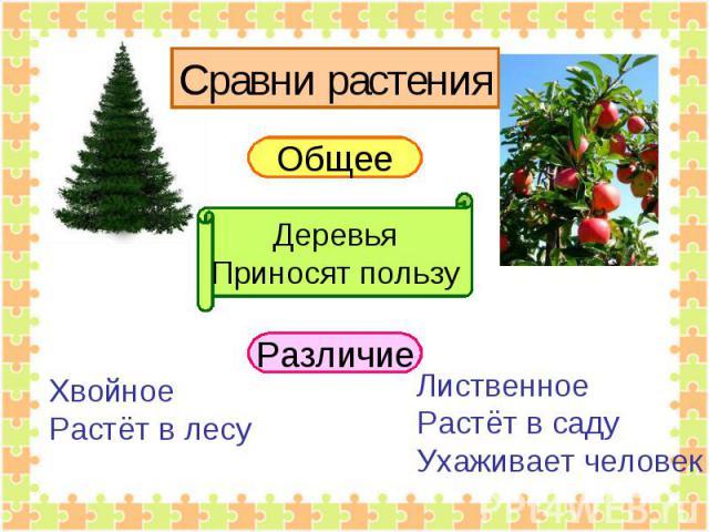 Сравни растения Общее ДеревьяПриносят пользу ХвойноеРастёт в лесу ЛиственноеРастёт в садуУхаживает человек