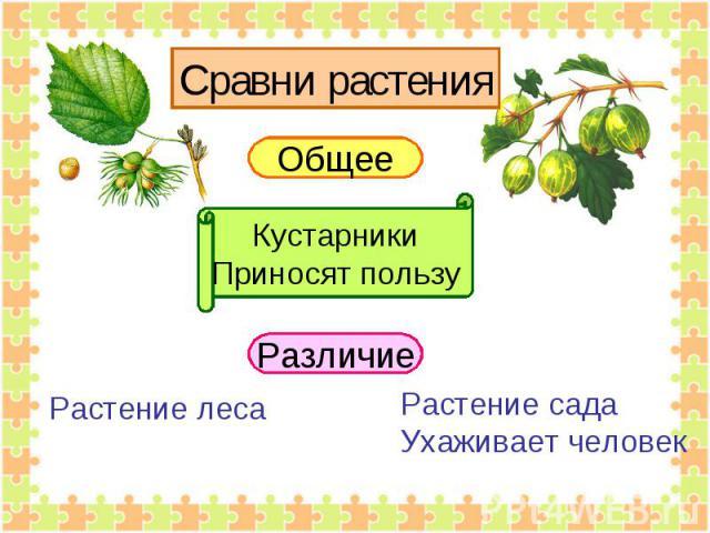 Сравни растения Общее КустарникиПриносят пользу Различие Растение леса Растение садаУхаживает человек