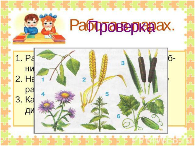 Работа в парах. Рассмотрите рисунки на стр.62 учеб- ника.2. Назовите друг другу изображённые растения.3. Какие из них культурные, а какие дикорастущие?