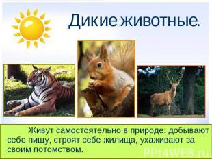 Дикие животные. Живут самостоятельно в природе: добывают себе пищу, строят себе