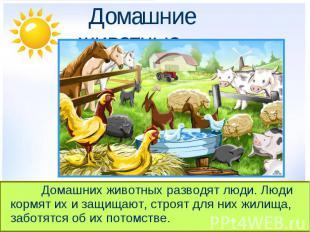 Домашние животные. Домашних животных разводят люди. Люди кормят их и защищают, с
