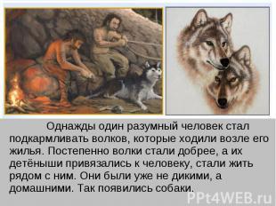 Однажды один разумный человек стал подкармливать волков, которые ходили возле ег