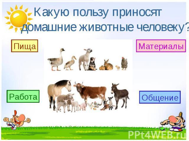 Какую пользу приносят домашние животные человеку?