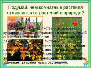 Подумай, чем комнатные растения отличаются от растений в природе? Осенью листья