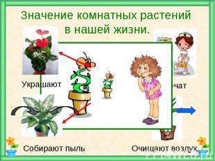 Значение комнатных растений в нашей жизни.
