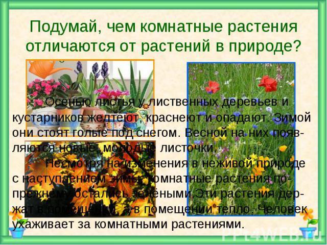 Подумай, чем комнатные растения отличаются от растений в природе? Осенью листья у лиственных деревьев и кустарников желтеют, краснеют и опадают. Зимой они стоят голые под снегом. Весной на них появ-ляются новые, молодые листочки.Несмотря на изменени…