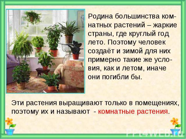 Родина большинства ком- натных растений – жаркие страны, где круглый год лето. Поэтому человек создаёт и зимой для них примерно такие же усло- вия, как и летом, иначе они погибли бы.Эти растения выращивают только в помещениях,поэтому их и называют -…