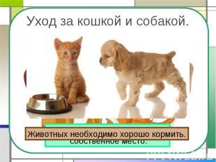 Уход за кошкой и собакой. Животных необходимо хорошо кормить. У кошки и собаки д