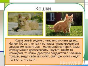 Кошки. Кошка живёт рядом с человеком очень давно, более 400 лет, но так и остала