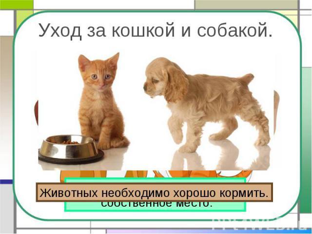 Уход за кошкой и собакой. Животных необходимо хорошо кормить. У кошки и собаки должно быть собственное место.
