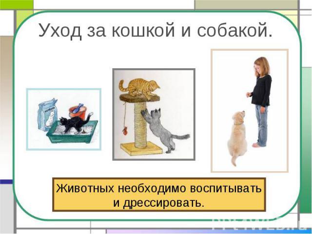 Уход за кошкой и собакой. Животных необходимо воспитыватьи дрессировать.