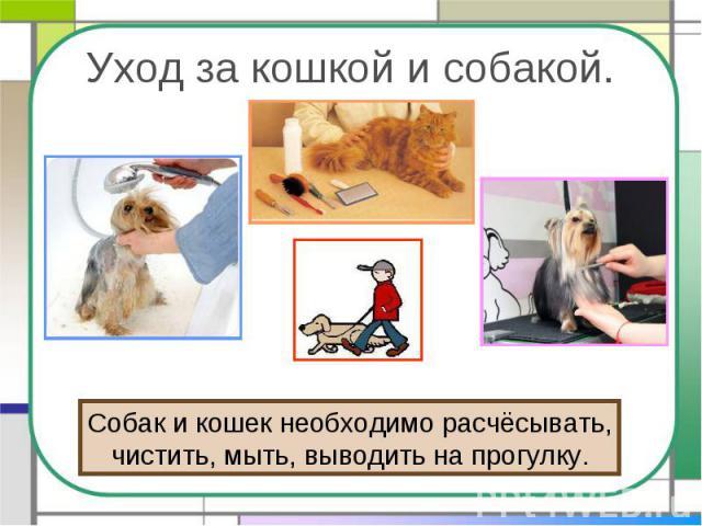 Уход за кошкой и собакой. Собак и кошек необходимо расчёсывать,чистить, мыть, выводить на прогулку.