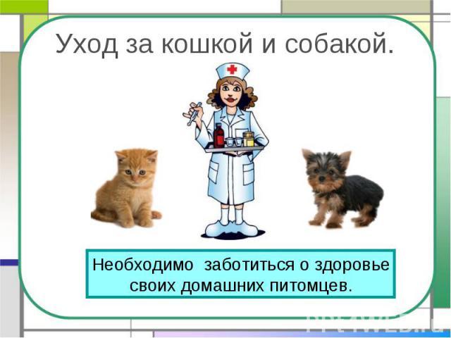 Уход за кошкой и собакой. Необходимо заботиться о здоровьесвоих домашних питомцев.