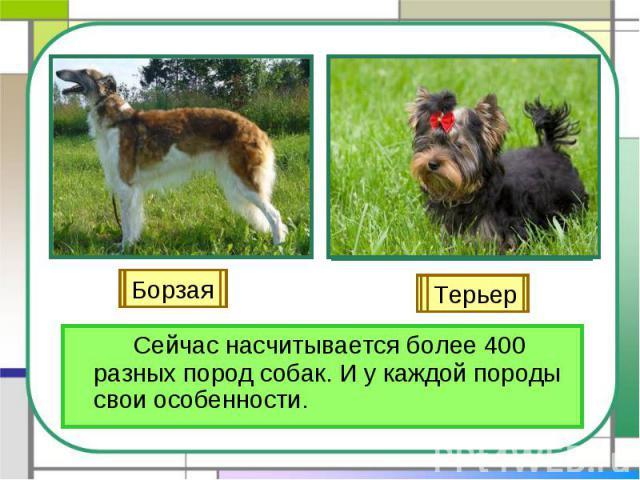 Сейчас насчитывается более 400 разных пород собак. И у каждой породы свои особенности.