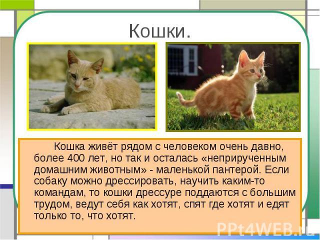 Кошки. Кошка живёт рядом с человеком очень давно, более 400 лет, но так и осталась «неприрученным домашним животным» - маленькой пантерой. Если собаку можно дрессировать, научить каким-то командам, то кошки дрессуре поддаются с большим трудом, ведут…