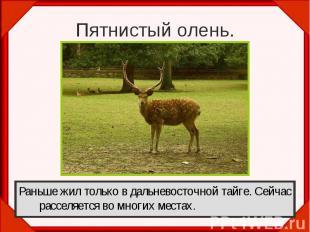 Пятнистый олень.Раньше жил только в дальневосточной тайге. Сейчас расселяется во