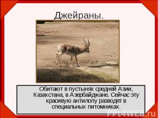 Джейраны.Обитают в пустынях средней Азии, Казахстана, в Азербайджане. Сейчас эту