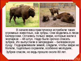В начале века практически истребили таких огромных животных, как зубры. Они води