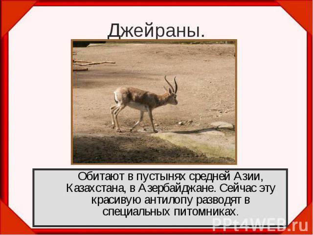 Джейраны.Обитают в пустынях средней Азии, Казахстана, в Азербайджане. Сейчас эту красивую антилопу разводят в специальных питомниках.