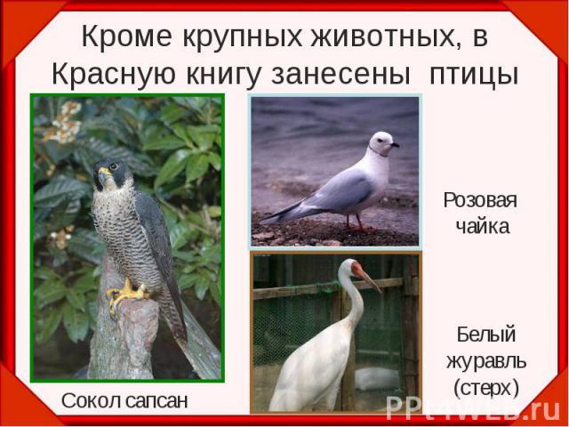 Кроме крупных животных, в Красную книгу занесены птицы Розовая чайка Белыйжуравль(стерх)