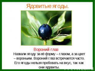 Ядовитые ягоды.Назвали ягоду за её форму – глазом, а за цвет– вороньим. Вороний