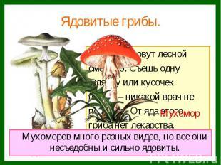 Ядовитые грибы. Этот гриб зовут лесной смертью. Съешь одну шляпку или кусочек но