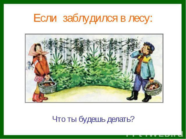 Если заблудился в лесу:Что ты будешь делать?