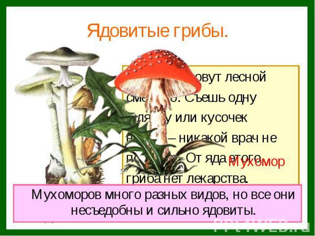 Ядовитые грибы. Этот гриб зовут лесной смертью. Съешь одну шляпку или кусочек ножки – никакой врач не поможет. От яда этого гриба нет лекарства. Мухоморов много разных видов, но все они несъедобны и сильно ядовиты.