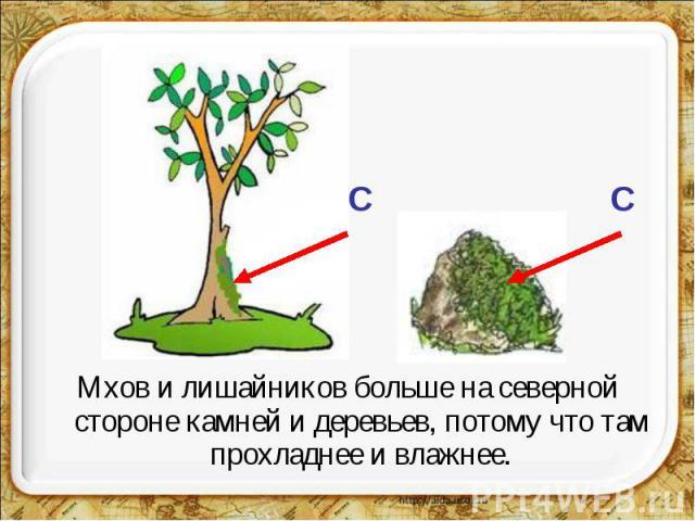 Мхов и лишайников больше на северной стороне камней и деревьев, потому что там прохладнее и влажнее.