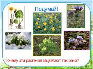 Подумай!Почему эти растения зацветают так рано?
