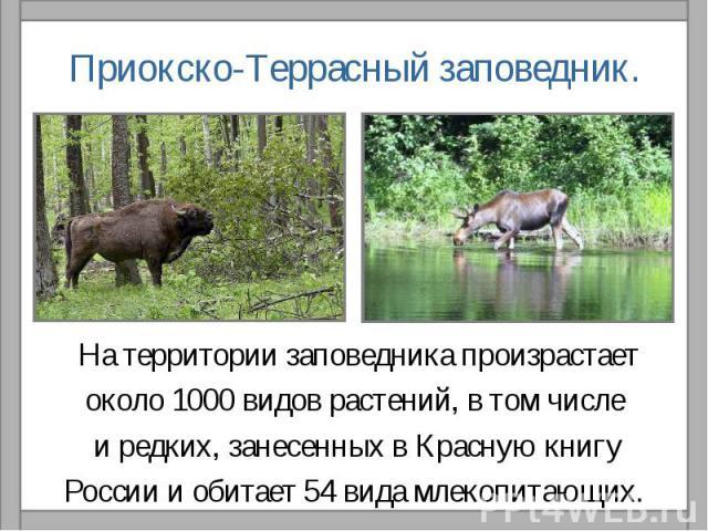 Приокско-Террасный заповедник.На территории заповедника произрастаетоколо 1000 видов растений, в том числе и редких, занесенных в Красную книгуРоссии и обитает 54 вида млекопитающих.