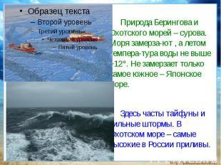 Природа Берингова и Охотского морей – сурова. Моря замерза-ют , а летом темпера-