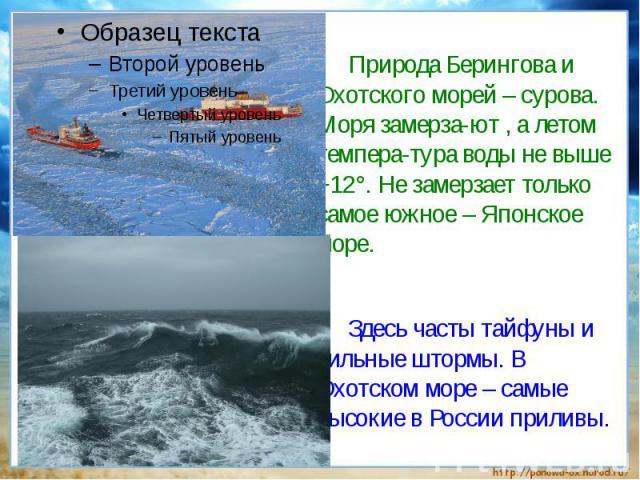 Природа Берингова и Охотского морей – сурова. Моря замерза-ют , а летом темпера-тура воды не выше +12°. Не замерзает только самое южное – Японское море. Здесь часты тайфуны и сильные штормы. В Охотском море – самые высокие в России приливы.