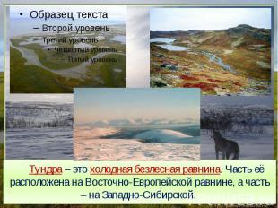 Тундра – это холодная безлесная равнина. Часть её расположена на Восточно-Европе