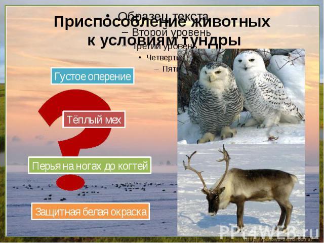 Приспособление животных к условиям тундры