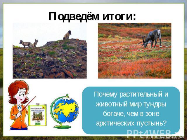 Подведём итоги: Почему растительный иживотный мир тундрыбогаче, чем в зонеарктических пустынь?