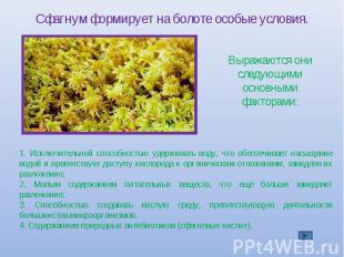 Сфагнум формирует на болоте особые условия. Выражаются они следующими основными