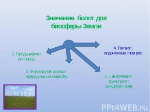 Значение болот для биосферы Земли 1. Продуцируют кислород 2. Формируют особые пр