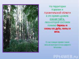 На территории Карелии и Архангельской области в это время шумела южная тайга, ле