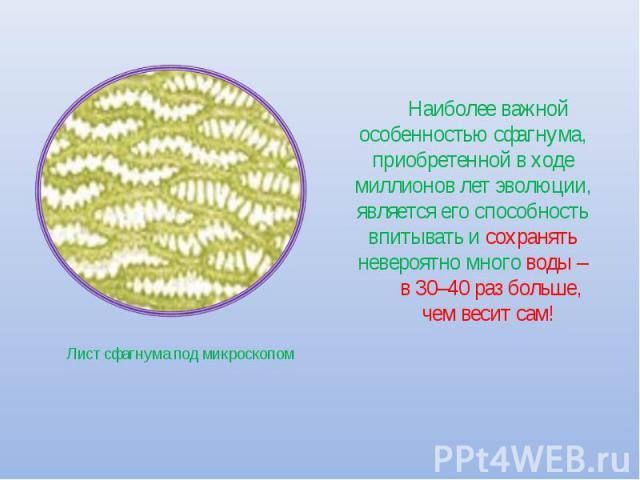 Наиболее важной особенностью сфагнума, приобретенной в ходе миллионов лет эволюции, является его способность впитывать и сохранять невероятно много воды – в 30–40 раз больше, чем весит сам! Лист сфагнума под микроскопом