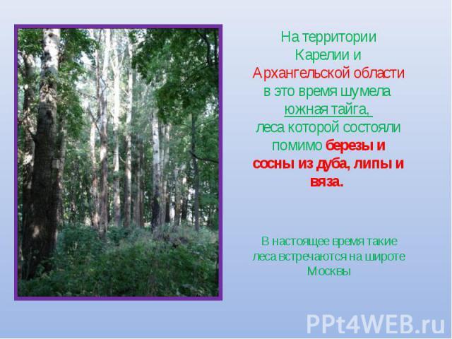 На территории Карелии и Архангельской области в это время шумела южная тайга, леса которой состояли помимо березы и сосны из дуба, липы и вяза. В настоящее время такие леса встречаются на широте Москвы