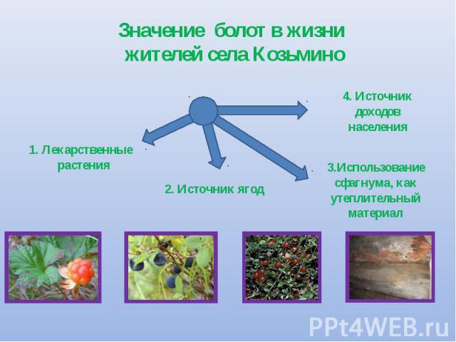 Значение болот в жизни жителей села Козьмино 1. Лекарственные растения 2. Источник ягод 4. Источник доходов населения 3.Использование сфагнума, как утеплительный материал