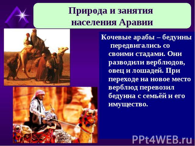 Природа и занятия населения Аравии Кочевые арабы – бедуины передвигались со своими стадами. Они разводили верблюдов, овец и лошадей. При переходе на новое место верблюд перевозил бедуина с семьёй и его имущество.