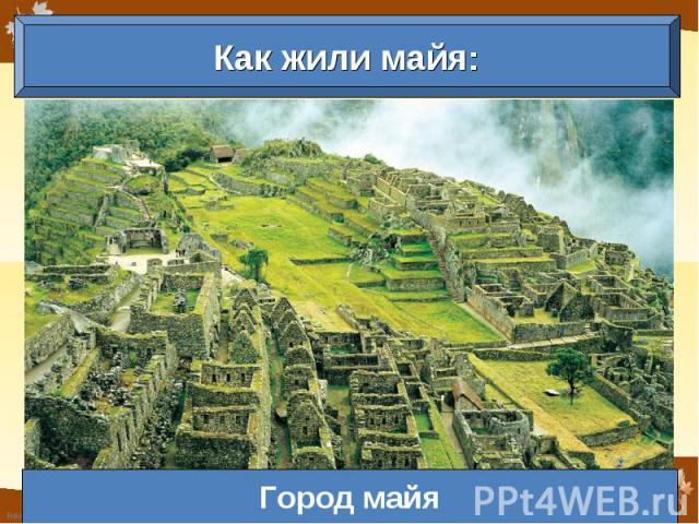 Как жили майя: Город майя