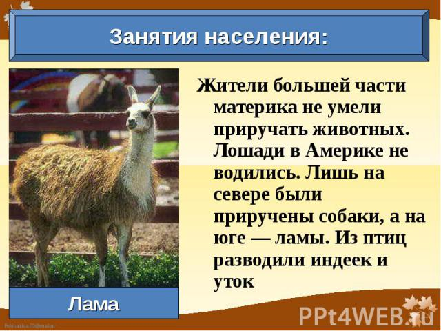 Занятия населения: Жители большей части материка не умели приручать животных. Лошади в Америке не водились. Лишь на севере были приручены собаки, а на юге — ламы. Из птиц разводили индеек и уток