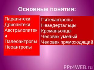 Основные понятия: ПарапитекиДриопитекиАвстралопитекиПалеоантропыНеоантропы Питек
