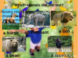 Which animals did Jim see?