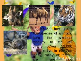 London Zoo has almost 750 species of animals, from the smallest monkey to the ta