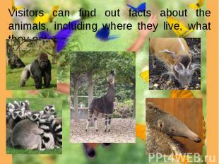 Visitors can find out facts about the animals, including where they live, what t