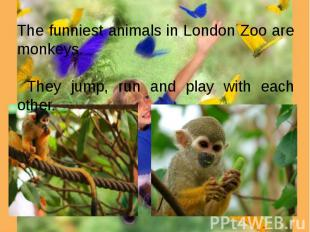 The funniest animals in London Zoo are monkeys. They jump, run and play with eac